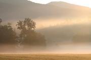 Mist a1