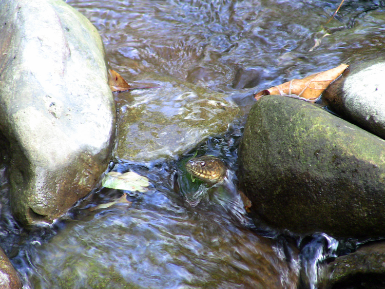 Snake Turtle 2