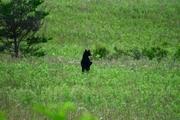 Bear 2a