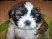 Davies.11.24.2008-6-weeks-old