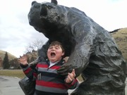 Grizzly Attack!