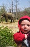 Evan and Elephant