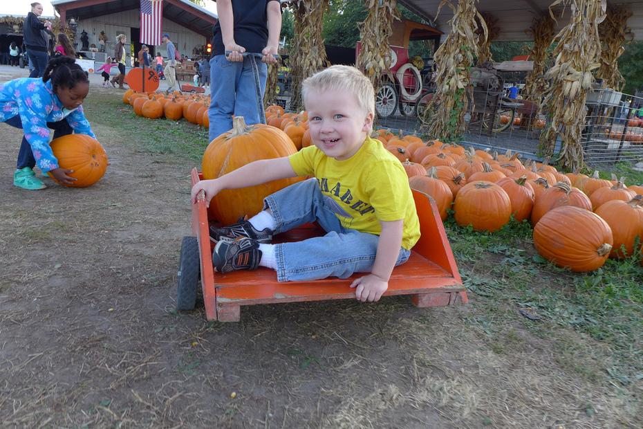 Liam in the Pumpkin Wagon