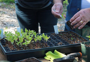 Grow More Food In Harmony With Nature!  Sustainable Living Permaculture Series