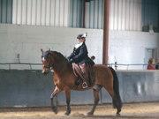 Classical Equitation Series