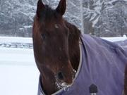 Ali in winter, 2007