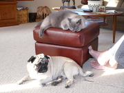 Chuka and Eddie, our cat
