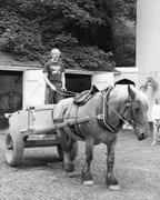 Logique, French Ardennes mare, in tipping cart
