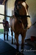 tina's horse