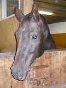 Big A (my dressage mare)