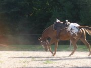 Maxes first day with a saddle on Lol! Bucas photo contest!