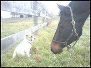 Bailey and Princess meet