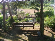 pond from swing