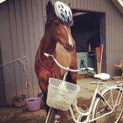A New Approach to Sensitizing a Horse to Bicycles! ;-)