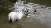 ~2007-2013 Horse Riding~