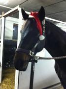 My horse, Penelope :)