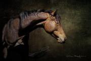 Ryan Courson Photography
