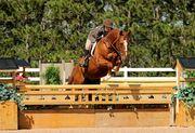 Horse Show Hunter