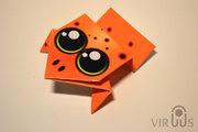 orange_dart_X_poisonous_frog