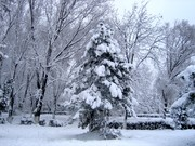 winter scene in Tabacarie (place-image inexistent today)1