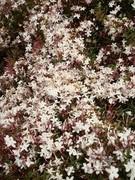 Flowers - Aroma