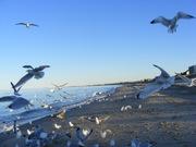 The birds 011