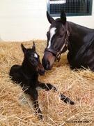Zenyatta and newborn colt ,March, 10 2012 #2