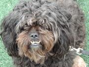 Hershey - my dog
