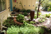 Spiral Potager: two months later