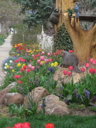 Tulips with stump critters