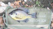 Shore fishin ponds of Ringwood