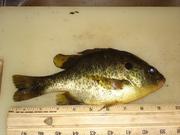 FISHING! 008