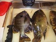 Fishing66