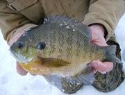 2010 ice fishing 152