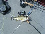 Bass on a fly 5-15-10