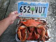 South Carolina has got the Blues....Crabs and Gills