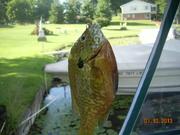 Vacation at Pine Hill Lake July 2013