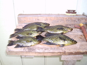 hernando lake fish