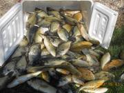 82 FISH 4-21-14