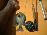 First big bluegill caught in 2008
