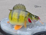 Replica Yellow Perch Ice Scene