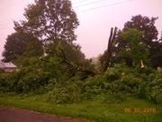 Big storm last nigh blew my neighbors tree down.....