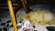 Greta as a pup