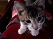 mr. kitten & friends