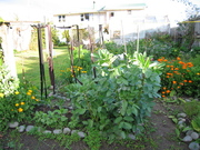 Winter Garden July 09