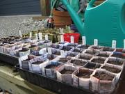 seedlings sown in newspaper pots