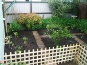 The new garden!