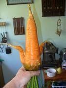 an interesting carrot!
