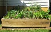 Last summers vege garden