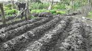 Urban Eden workshop - giving the gift of growing good soil!
